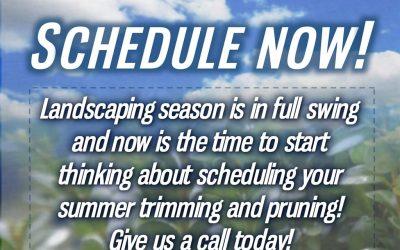 Schedule Now!